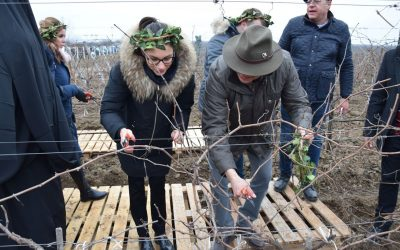 170 DECARES OF FUTURE GRAPEVINES CONSECRATED ON TRIFON THE PRUNER'S DAY