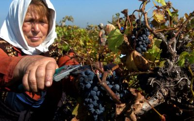 The wines of Bulgaria